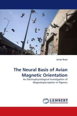The Neural Basis of Avian Magnetic Orientation