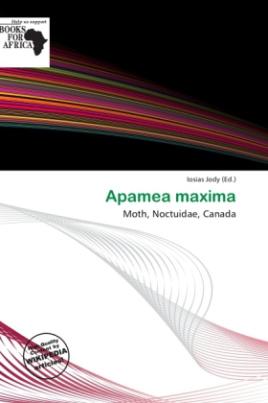 Apamea maxima